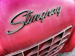 Dingy Stingray